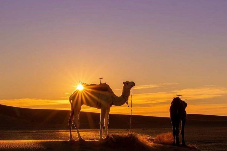 Tour de 3 días al Desierto y Marrakech desde Fez